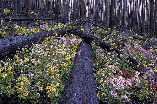 yellowstone-wildflowers-9351